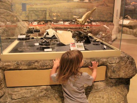 Exhibits in the Thomas Condon Paleontology Center.
