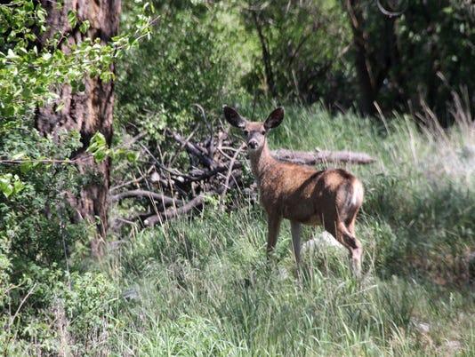 636328020373843650-Deer.jpg