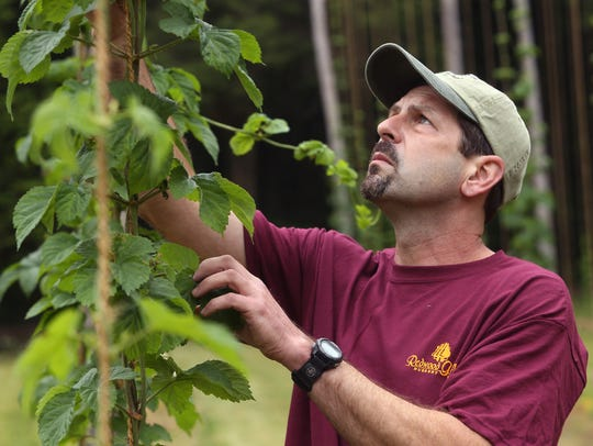 Jeff Martin, co-owner of Bitter End Hops, inspects
