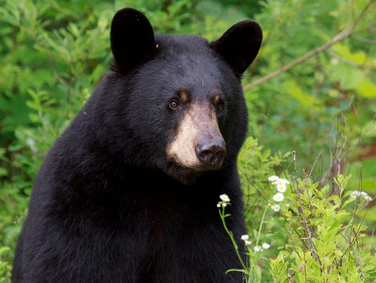 Black bear with white flowers