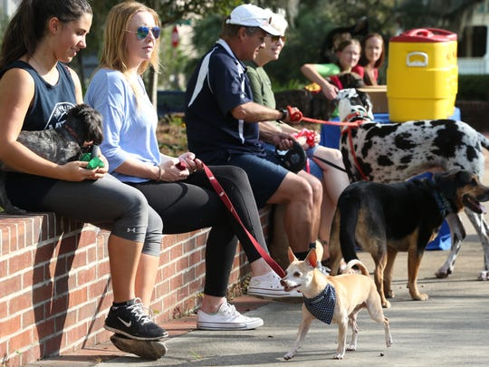 Spending time with your pet or taking a walk can be stress relievers. Here, pet owners gather at Boulevard Park's dog park, just south of Gaines Street and MLK Blvd.