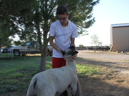 Fifteen-year-old Taylor Martinez works with one of his lambs, Batman, before the Eddy County Fair. Taylor will show three lambs and two pigs at the fair this year.