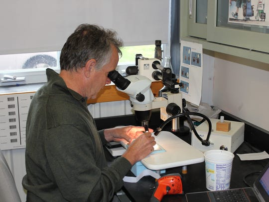Agency of Agriculture employee Doug Lapointe sorts and identifies species from a mosquito trap.  He selected species for submittal to the Vermont Department of Health to identify whether they are carrying either West Nile Virus or Eastern Equine Encephalitis.