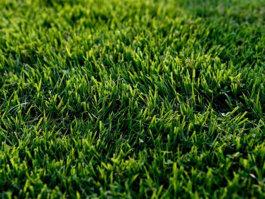 Freshly cut grass cut by Clean Air Lawn Care, an eco-friendly