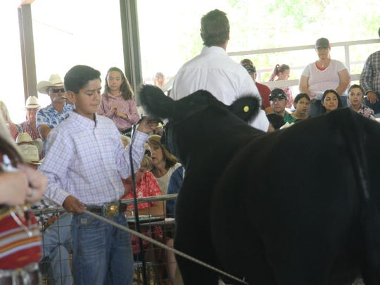Tye Martinez shows is steer to bidders at the Eddy County Fair Junior Livestock Auction Saturday at the Artesia Fairgrounds.