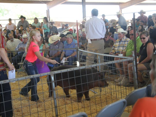 A pig is displayed to bidders at the Eddy County Fair Junior Livestock Auction Saturday at the Artesia Fairgrounds.