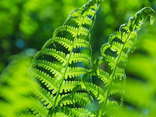 Spring bright green fern