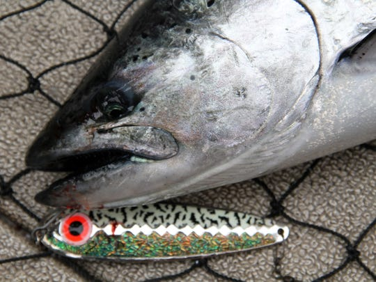 A chinook salmon and the spoon it was caught on is shown in a landing net during a fishing outing on the Wisconsin waters of Lake Michigan near Milwaukee.