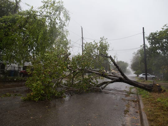 A down tree in on Noakes Street in Corpus Christi as rain and wind from Hurricane Harvey starts on Friday, Aug. 25, 2017.