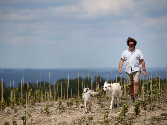 Richard Rainey, general manager of Forge Cellars, walks through the newly planted vineyard of Pinot Noir.