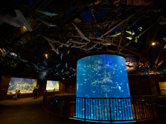 The shipwreck room at Wonders of Wildlife National