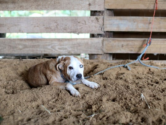 One of seven remaining dogs evacuated from Ocala at