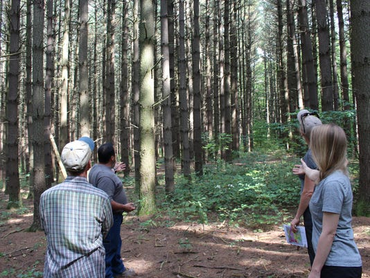 Mohican-memorial-state-forest