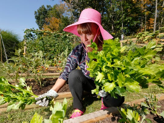 Andrea Bogart harvests celery from her garden in Endwell