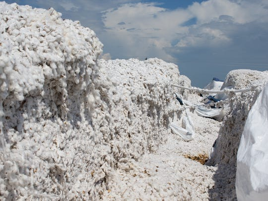 Nearly 16,000 bales of cotton were left unsalvageable