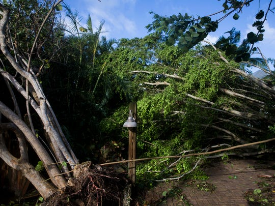 Trees and limbs that were brought down by Hurricane Irma cover a yard in Bonita Springs on Monday, Sept. 11, 2017.