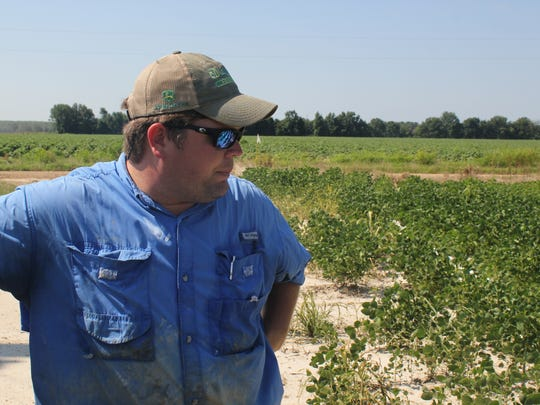 East Arkansas soybean farmer Reed Storey said half of his soybean crop in Marvell, AR., has shown damage from dicamba, an herbicide that has drifted onto unprotected fields and spawned hundreds of complaints from farmers.