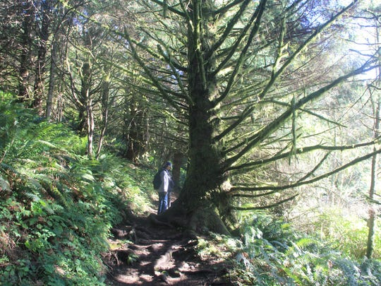 Hiking Neahkahnie Mountain Trail.