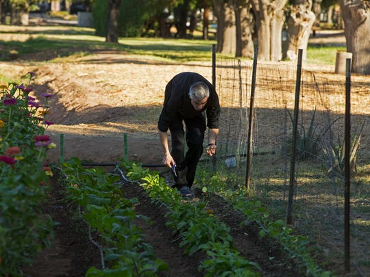 Executive Chef Dustin Christofolo clips some greens for a dish that he is preparing on Oct. 25, 2017 at Quiessence at The Farm at South Mountain in Phoenix, Ariz. Quiessence has planted a 3/4 acre farm to provide the produce for the restaurant.