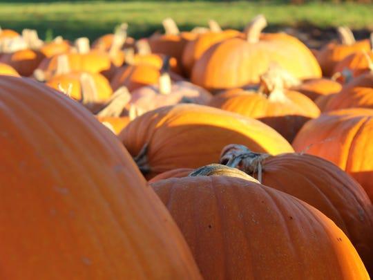 The Estero United Methodist Church is selling pumpkins