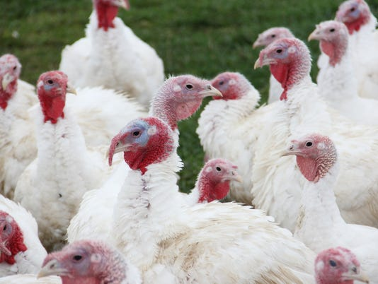 636463557547679774-turkey.JPG