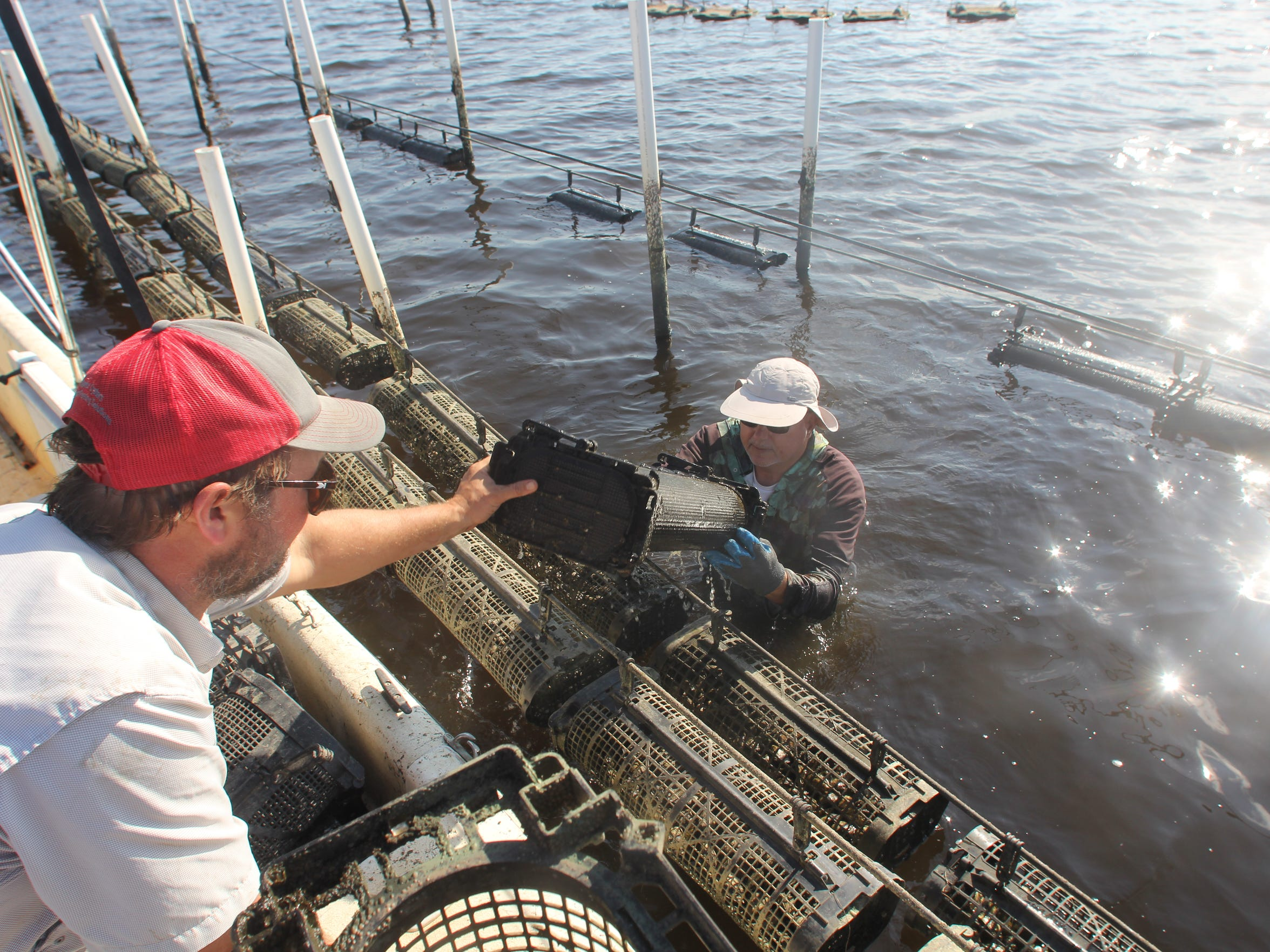 Ben Wiggins, left, and Bob Bruggner of Palmetto Island Oyster Company work their aquaculture lease in Wakulla County.