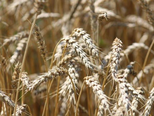 WSF-WheatKottke2-7-22.jpg