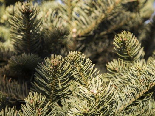 Are Real Or Fake Christmas Trees Better For The Environment?