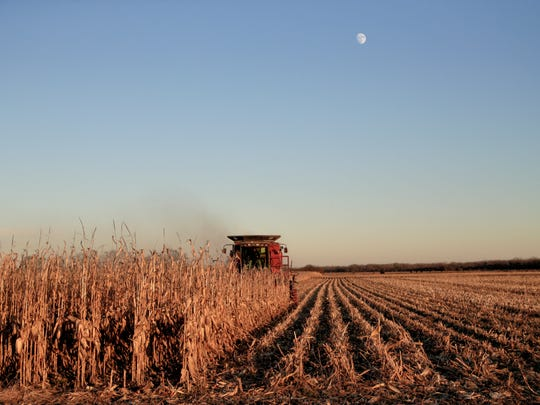 Corn is harvested near Schyler, Neb., Thursday, Nov. 30, 2017. A couple days of strong winds in late October arrived at the wrong time for corn farmers who saw their crops shrink as ears of corn fell to the ground. Some eastern Nebraska farmers reported the value of their crop dropping roughly $19,000 an acre overnight as their yields fell from an estimated 250 bushels an acre before the wind to roughly 190 bushels afterward, according to crop insurance giant RCIS.