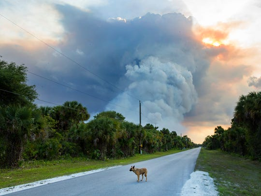 A brush fire burns near Frangipani Avenue in Naples