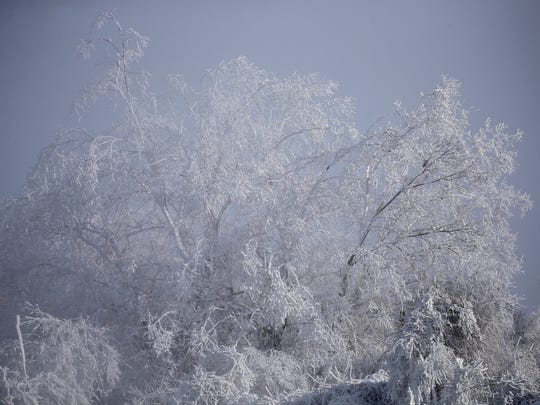 Ice clings to tree branches near High Falls as temperatures hovered around zero on Saturday.