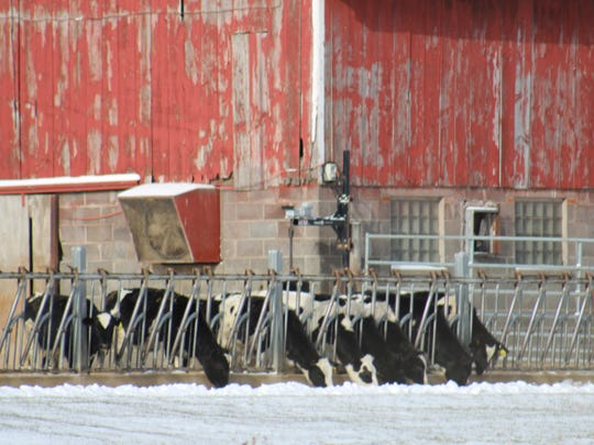 Farmers on our state's nearly 9,000 dairy farms take extra measures to ensure warmth, safety and comfort for the animals that are their livelihood.
