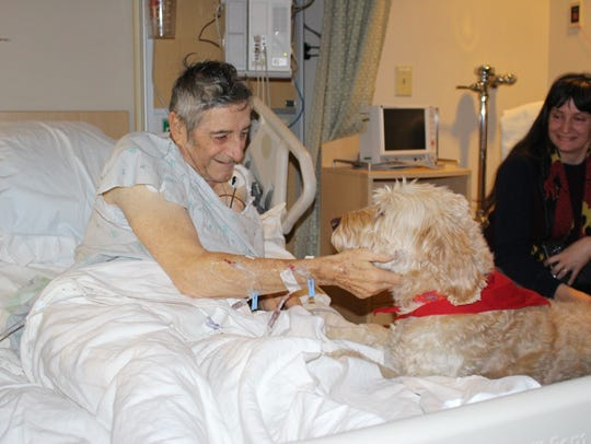 An ICU patient gets a visit from Cooper, a goldendoodle
