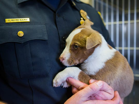 Captain Patrick McMenamy holds a puppy that was rescued by Corpus Christi Animal Care Services on Tuesday, Feb. 6, 2018, from a home on the Southside. The puppy was rescued after a video posted on Facebook showed the animal being abused.