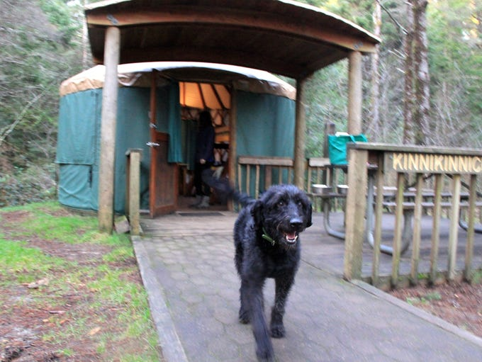 Yurts at Jessie M. Honeyman Memorial State Park have