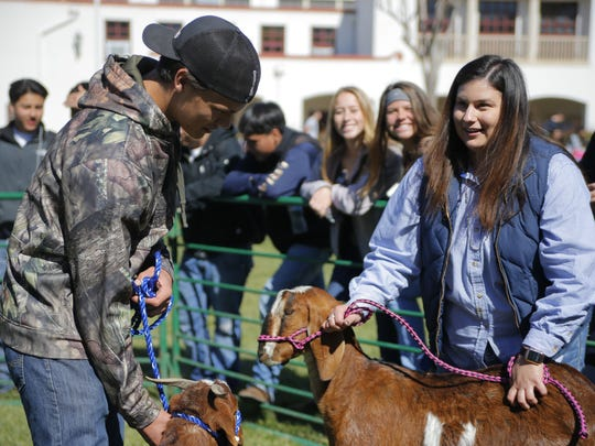 Rachel Martinez, FFA advisor in the agricultural department chair at Salinas High, readies to goats to be kissed.