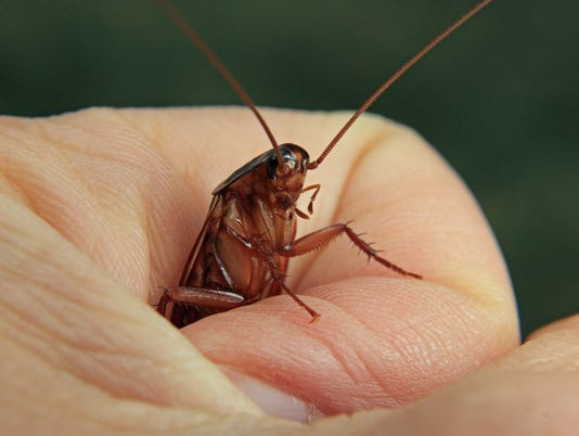 636558561628446356-Roach-in-the-Hand---better-than-2-in-the-cupboard.jpg