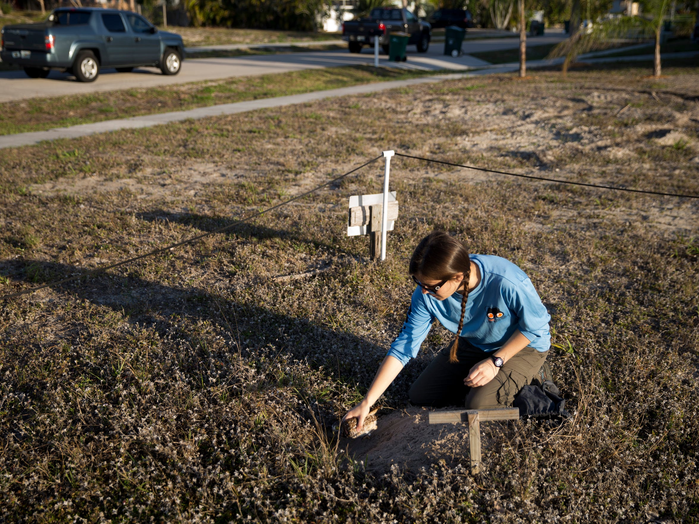 Allison Smith, a student researcher at the University of Florida, returns a female burrowing owl to its home after banding its leg for future study in a vacant lot Thursday, March 1, 2018 in Marco Island. Smith has access to 60 total sites on the island allowing her to study and engage with these threatened birds.