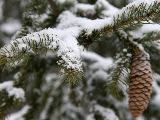Snow collects on an evergreen tree at Swaim Park in Montgomery, Saturday, March 24, 2018. A winter weather warning remains in effect until 2 a.m. Sunday for portions of Southeast Indiana, Northeast and Northern Kentucky and Southwest Ohio, including Hamilton County. Butler, Clermont, Brown, and Adams counties are under a winter storm advisory until 2 a.m. Sunday.