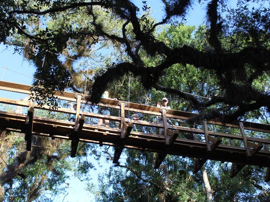 The Canopy Walkway at Myakka River State Park in Sarasota is suspended 25 feet above the ground, and extends 100 feet through a live oak and sabal palm hammock.