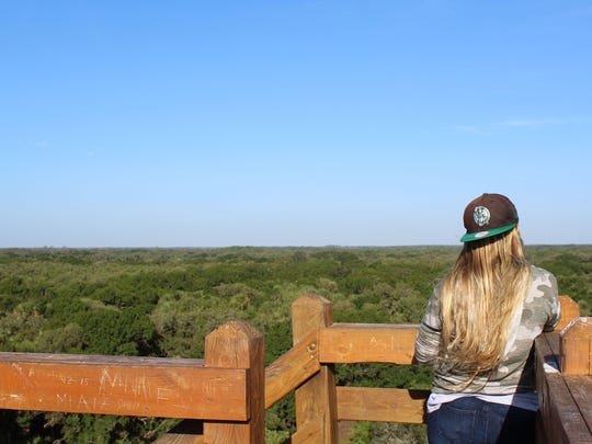 Visitor to Myakka River State Park takes in the view from the 74-foot-high Canopy Walkway tower on May 5, 2018.