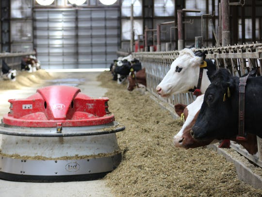 Dr. Phil Cardoso suggests feeding 28 pounds of DMI per cow each day three weeks before calving.
