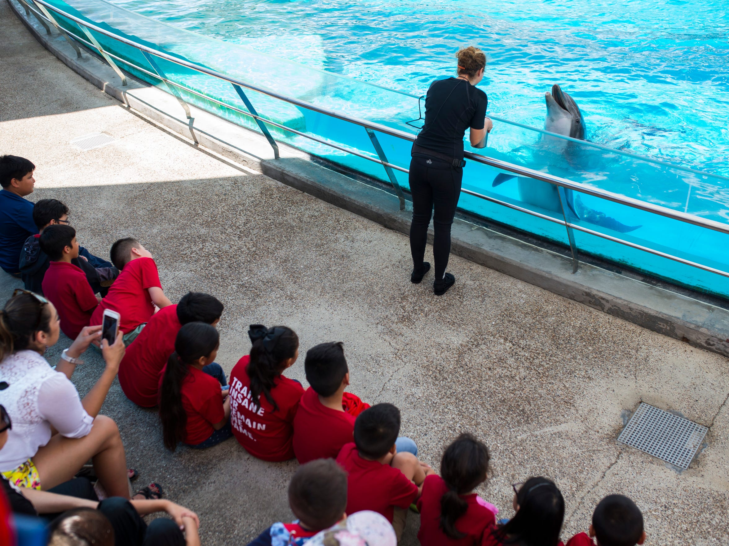 Kids watch as  trainer Merritt Grusecki gives instructions to one of the dolphins during their show on Thursday, May 10, 2018 at Texas State Aquarium.