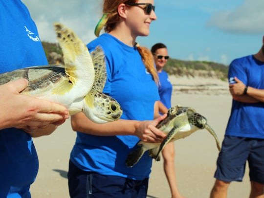 SeaWorld Orlando's Animal Rescue Team released two green sea turtles at Playalinda Beach, on the Canaveral National Seashore.