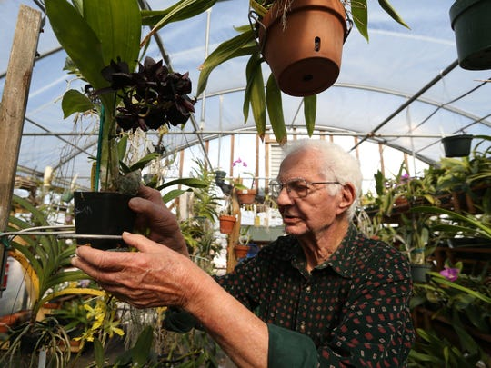 Sam Jones works in the temporary orchid greenhouse