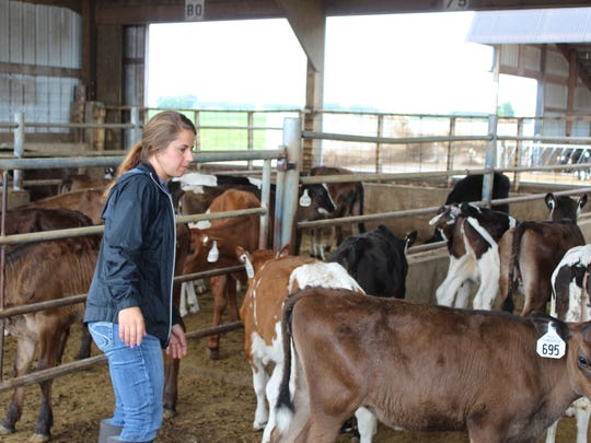 When it comes to moving a cow, it's important to recognize and understand the animal's flight zone and the blind spot and use them properly to herd cattle. Here livestock nutrition consultant Alice Stafne works a pen of calves during a hands-on heifer handling exercise at Vita Plus Farm School at Pagel's Ponderosa Calf Ranch on June 19.