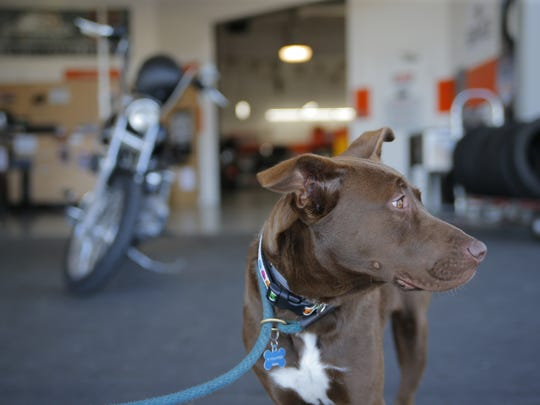 The SPCA for Monterey County held the Dogs and Hogs event at West Coast Harley Davidson in Salinas.