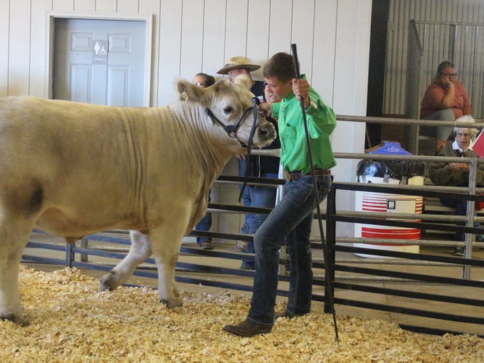 Chase Aiken's reserve champion market steer sold for