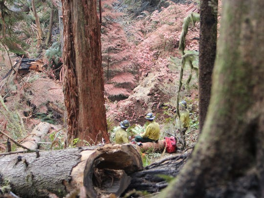A group of fire fighters take a break under trees that have been coated with fire suppression chemicals at the Silver Creek Fire.