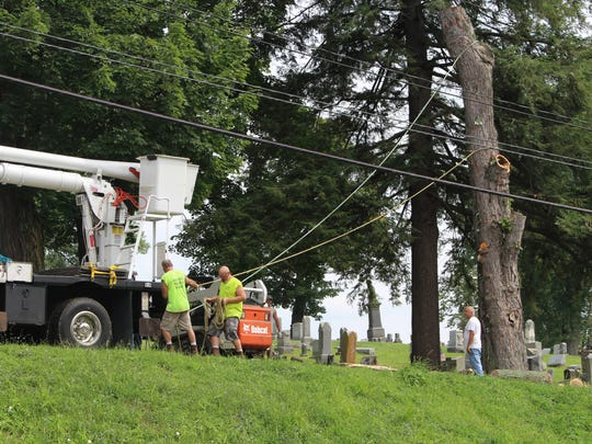Crews on Friday cut down the old maple tree where the